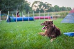 Cão ao lado da bacia de água Imagem de Stock