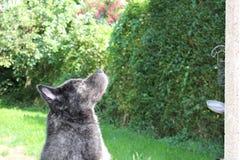 Cão após um banho Imagens de Stock