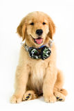 Cão assentado com os fones de ouvido no fundo branco Imagens de Stock