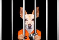 Cão atrás das barras na prisão da cadeia fotografia de stock royalty free