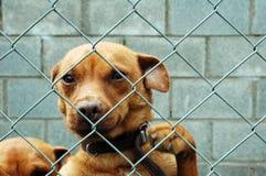 Cão atrás de uma cerca Imagens de Stock