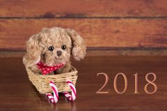 Cão bege bonito Fotos de Stock Royalty Free