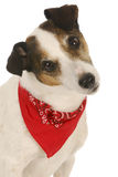 Cão bonito Imagem de Stock