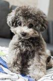 Cão bonito Imagens de Stock
