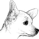 Cão bonito Fotografia de Stock