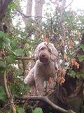 Cão bonito Fotografia de Stock Royalty Free