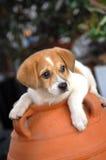 Cão bonito Imagens de Stock Royalty Free
