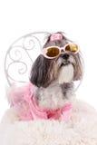 Cão bonito com óculos de sol, o vestido cor-de-rosa e as asas Fotografia de Stock Royalty Free