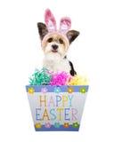 Cão bonito com a caixa feliz da Páscoa foto de stock