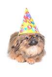 Cão bonito com o chapéu do aniversário isolado no branco Foto de Stock