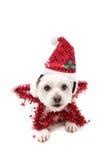 Cão bonito da estrela do Natal foto de stock royalty free