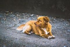 Cão bonito da rua foto de stock