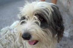 Cão bonito da rua Imagem de Stock