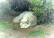 Cão bonito do dorminhoco Foto de Stock