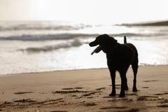 Cão bonito doméstico na praia fotografia de stock