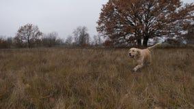 Cão bonito e proprietário que apreciam a caminhada na natureza vídeos de arquivo