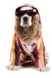 Cão bonito em um fundo branco fotografia de stock