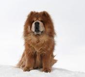 Cão bonito em um monte da neve Imagem de Stock Royalty Free