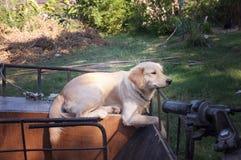 Cão bonito em uma motocicleta do side-car imagem de stock