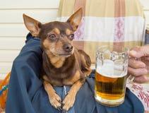 Cão bonito engraçado com uma cerveja, que ofereça seu proprietário humor imagem de stock