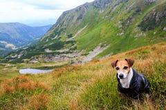 Cão bonito na capa de chuva Imagem de Stock Royalty Free