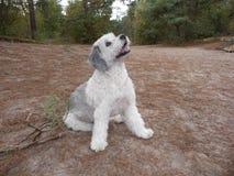 Cão bonito na floresta e nas dunas Fotos de Stock