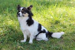 Cão bonito na grama imagens de stock