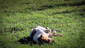 Cão bonito na grama vídeos de arquivo