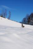 Cão bonito na neve fotografia de stock royalty free