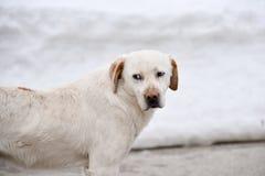 cão bonito na neve imagens de stock
