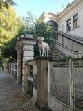 Cão bonito na parte superior fotografia de stock