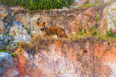 Cão bonito no ambiente tropical Imagem de Stock Royalty Free