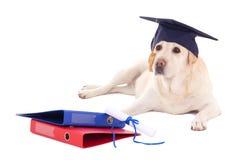 Cão bonito no chapéu do estudante com o diploma isolado no branco fotografia de stock royalty free