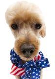 Cão bonito patriótico Imagem de Stock Royalty Free