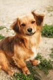 Cão bonito peluches Imagens de Stock