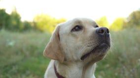 Cão bonito que descansa na natureza vídeos de arquivo