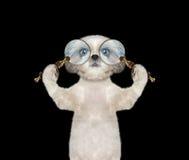 Cão bonito que olha através da lente de aumento de duas lupa Fotos de Stock Royalty Free