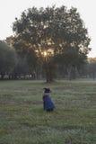 Cão bonito que olha o nascer do sol através das folhas de uma árvore Imagens de Stock