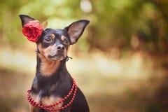 Cão bonito, um cachorrinho na em uma grinalda da flor que senta-se em uma parte traseira imagem de stock royalty free