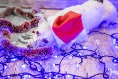 Cão branco bonito Foto do Natal Ano novo feliz e Feliz Natal Imagem de Stock