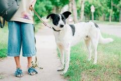 Cão branco com as orelhas pretas dos pontos pretos Fotos de Stock Royalty Free