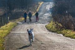 Cão branco do abrigo foto de stock royalty free