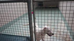 Cão branco entusiasmado na adoção de espera do abrigo animal video estoque