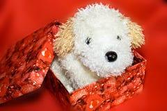 Cão branco na caixa vermelha como um presente fotografia de stock royalty free