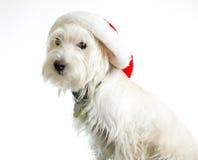 Cão branco no chapéu de Santa imagem de stock royalty free