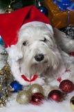 Cão branco no chapéu de Santa com as caixas de presente sob a árvore de Natal Foto de Stock