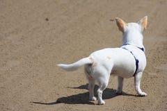Cão branco no protetor Fotos de Stock Royalty Free