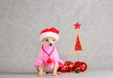 Cão branco pequeno em um chapéu vermelho e branco (feriado do ano novo) imagens de stock
