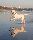 Cão brincalhão fotografia de stock