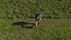 Cão brincalhão com seu proprietário fora na grama filme